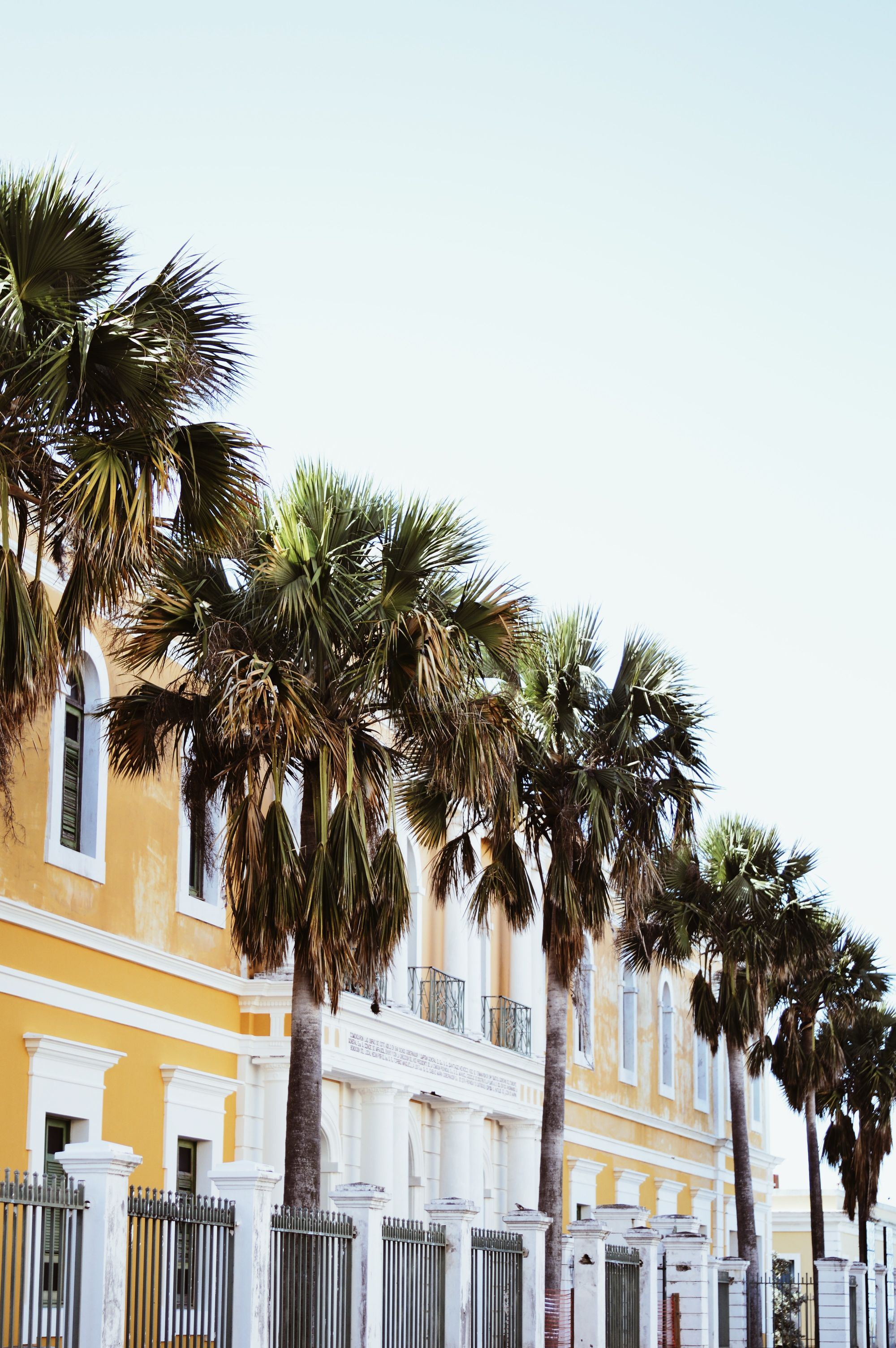 Photos of palm trees lined in front of older buildings in San Juan, Puerto Rico.